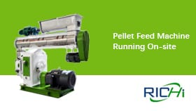 Pellet Machine For Feed, Feed Pellet Machinery, Running On Site