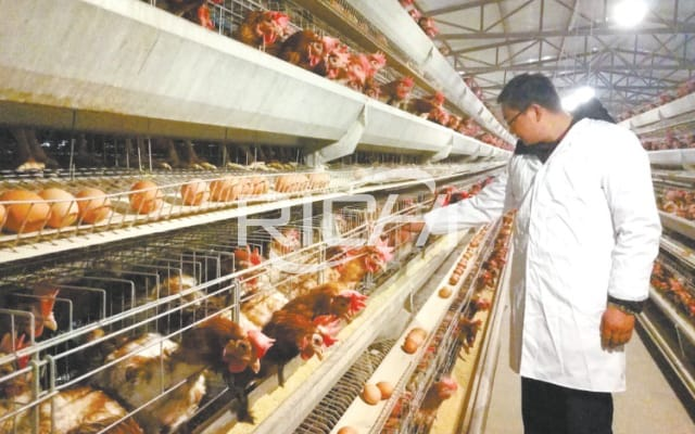 large poultry feed plant manufactures in India