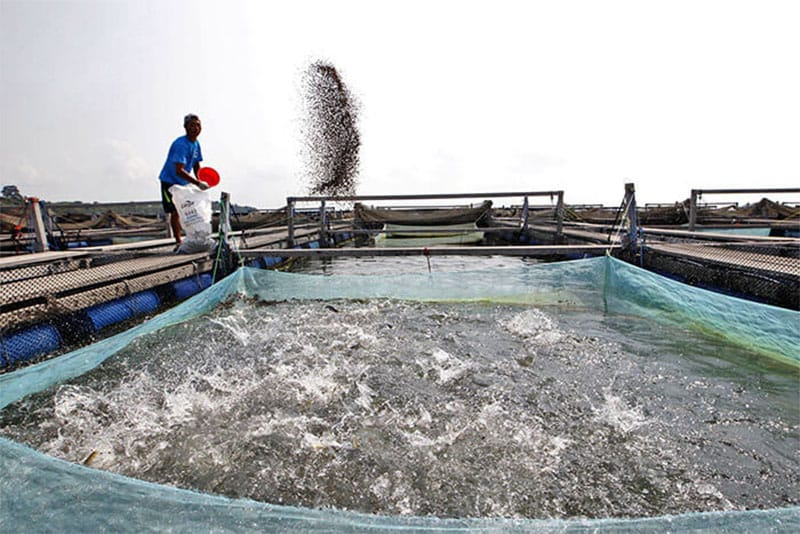 fish feed machine price in bangladesh