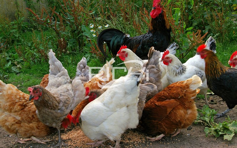 1-2 ton chicken feed production price