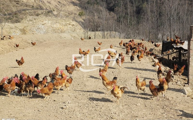 stages of poultry feed production and its equipments