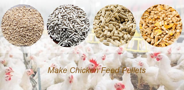 best food for egg laying chickens